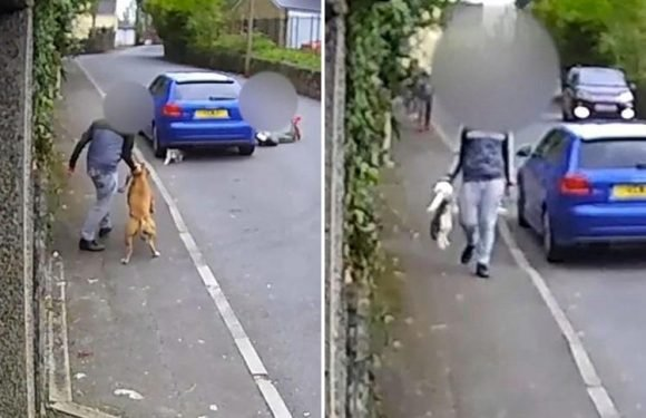 Sick Facebook group DEFENDS vile teens who used their dog to maul cat to death