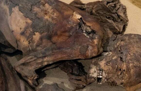 Scientists Have Discovered That Prehistoric Egyptians Mummified Their Dead Long Before The Pharaohs