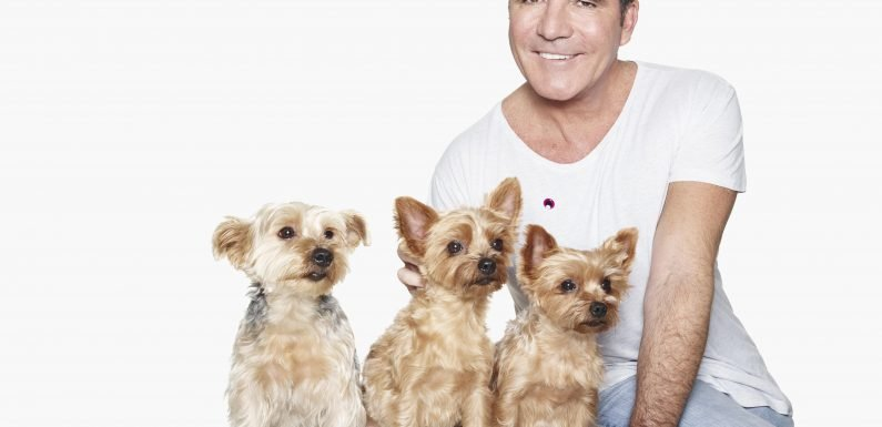 Simon Cowell pampers his beloved dogs by flying them by private jet