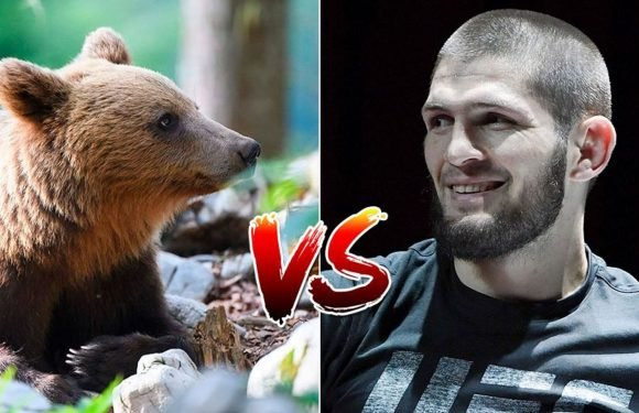 Watch Khabib Nurmagomedov wrestle bears