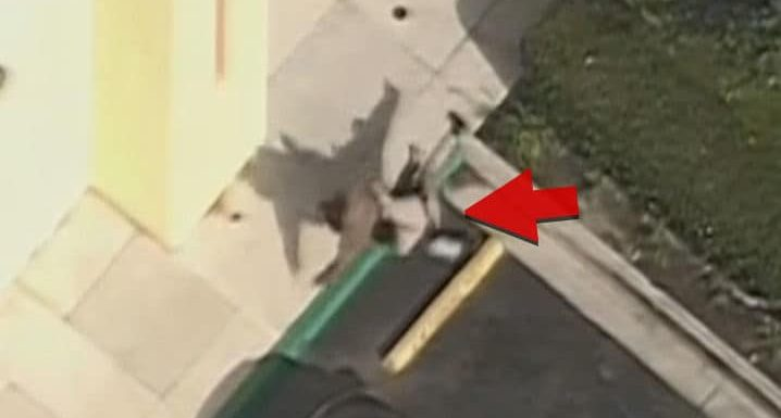 CHP Take Down Car Theft Suspect With Perfect Form Tackle
