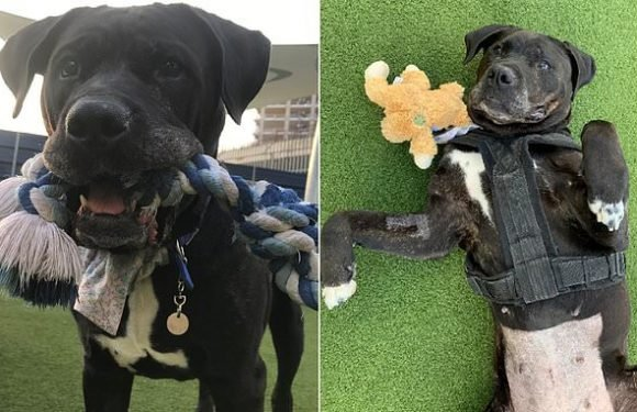 Britain's 'unluckiest dog' spends 100 days at Battersea