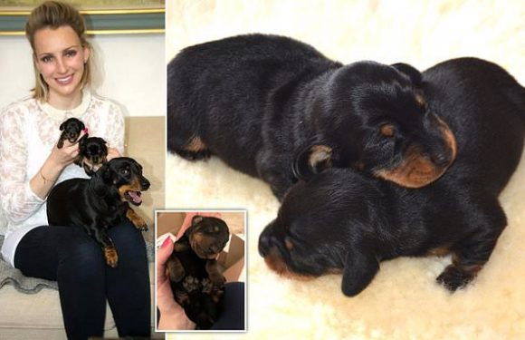 Britain's first cloned dog gives birth to 2 healthy dachshund puppies