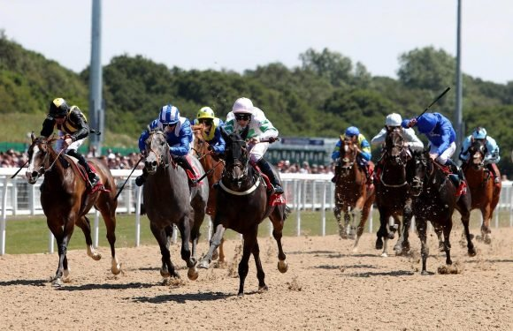 Free horse racing tips for today: Market Rasen, Wincanton, Newcastle and Wolverhampton – The Wizard of Odds' betting preview for Thursday, November 22