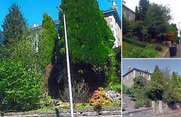 Flat owner wins five-year battle to avoid felling 100ft trees