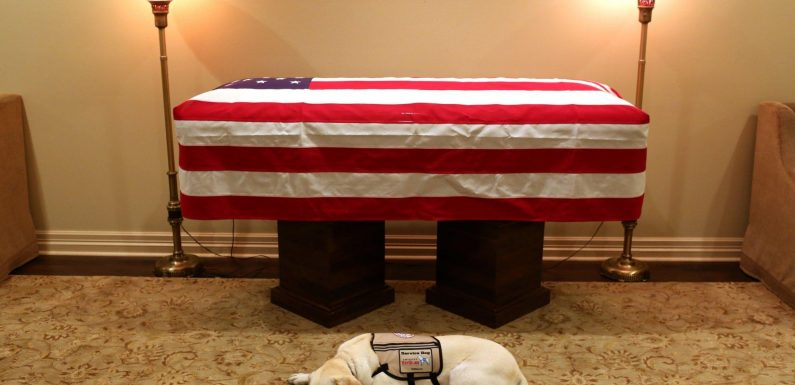 Touching moment George HW Bush's loyal service dog Sully lays next to former US President's coffin before his state funeral