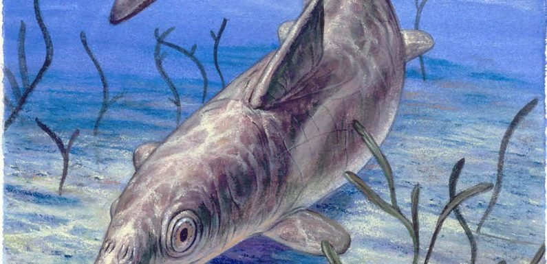 180-million-year-old 'sea monster' found with skin and blubber