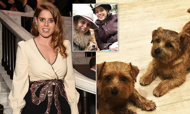 Princess Beatrice mourns the loss of her beloved dog Orange