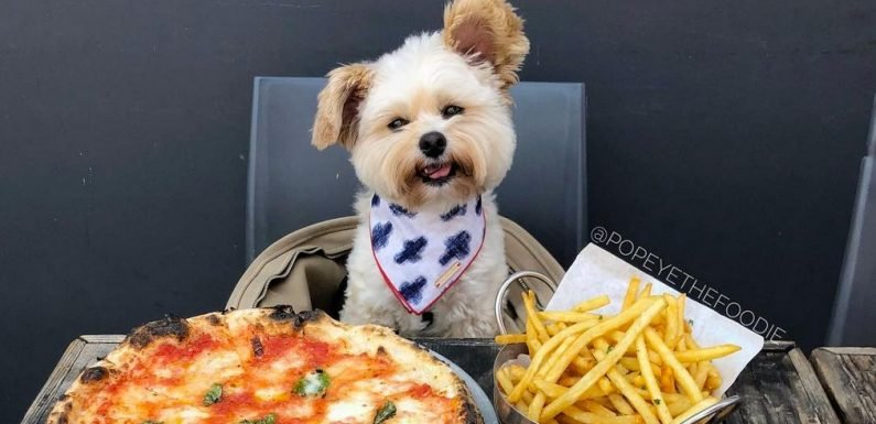 Popeye the Foodie Dog Dines Better Than You Do!