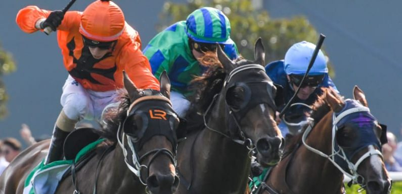 Race-by-race guide and tips for Gunnedah on Tuesday