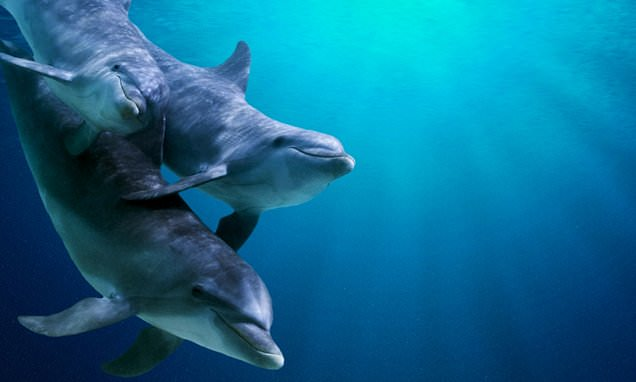 Male dolphins have a best buddy they rely on for years