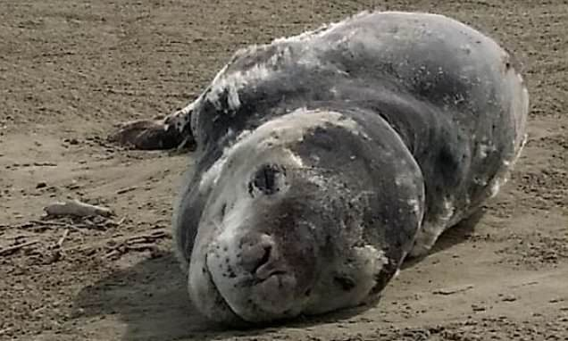 Scientists track down owner of seal faeces USB stick