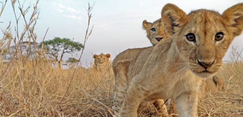 Serengeti is Discovery's latest visually-rich series about Africa: Here's what you need to know