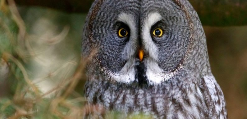 Want to Read About the Superb Owl? Click Here