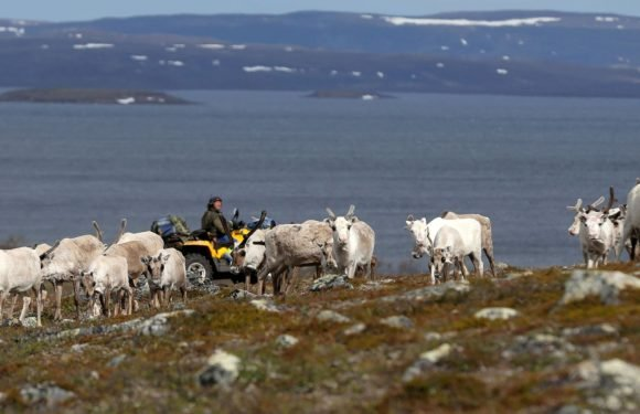 Norway gives go-ahead for Arctic copper mine despite fears of Sami herders