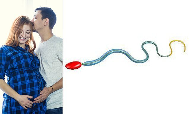 The secret to sperm's swimming prowess: Reinforced tail coating