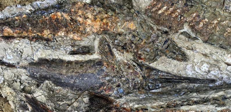 Fossil Site Reveals Day That Meteor Hit Earth and, Maybe, Wiped Out Dinosaurs