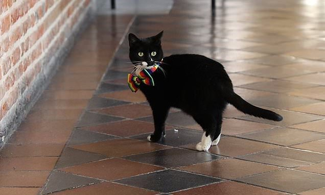 Evie the female Cabinet Office feline is given a promotion