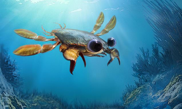 Newly discovered 'Chimera Crab' is platypus of crustaceans
