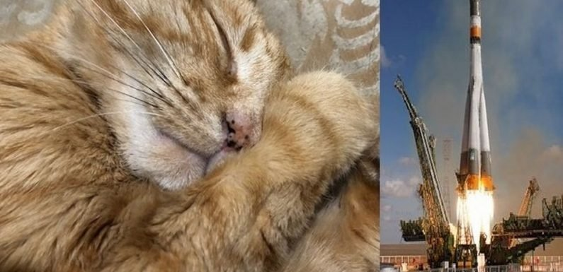 Ashes of cat will be launched into space for burial 'like no cat has had before'