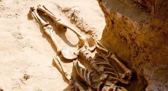 2,500-year-old skeletons found buried with gold ornaments and horse's head