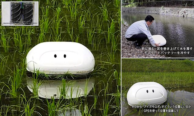 RoboDUCK could be used to keep rice fields free from pests and weeds