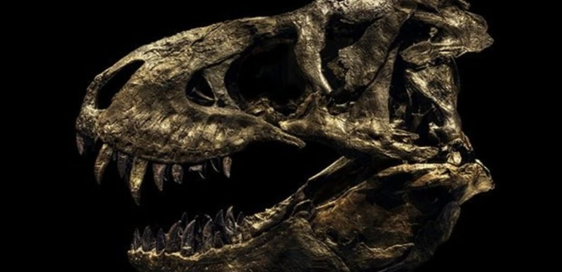 Awesome pics reveal true terrible majesty of dinosaurs