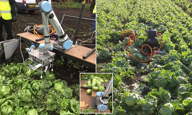 Tip of the iceberg? New Vegebot could help plug agriculture labour…