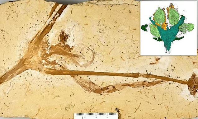 World's oldest lily grew 115 million years ago