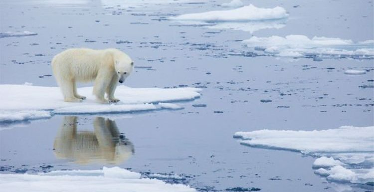 Climate change: Polar bear experts warn of irreversible ice loss – 'Impossible to survive'