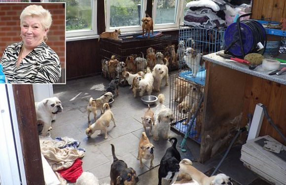 'Hoarder' fined after she left 100 dogs to suffer at her squalid home