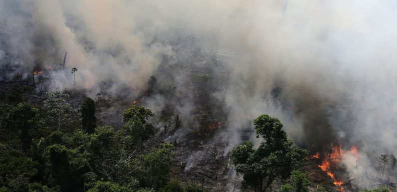 Almost 4,000 new Amazon rainforest fires spotted - two days