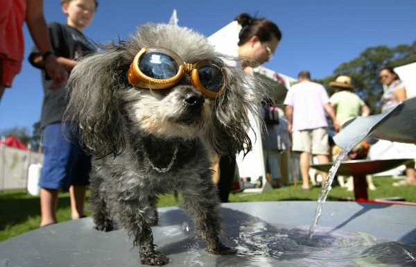 """These Photos Of Dogs Wearing Goggles Feature The Cutest """"Doggle"""" Poses Ever"""