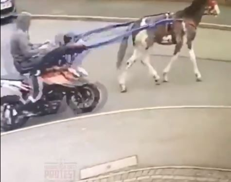 Bizarre moment youths use a HORSE to 'tow away stolen motorbike' in Kent