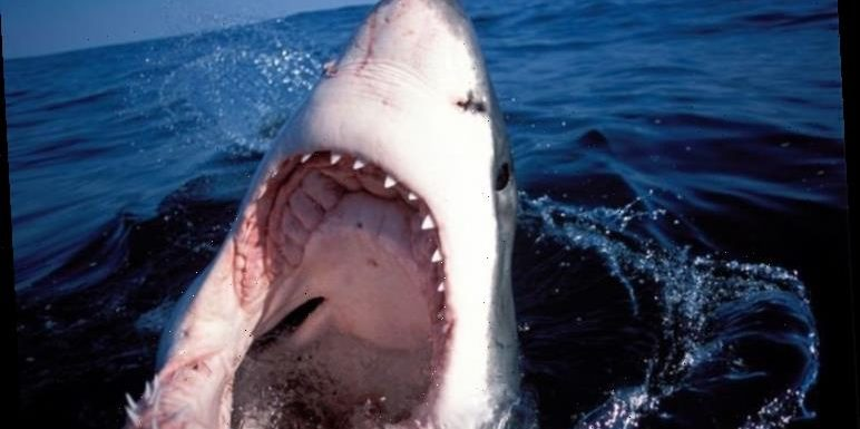 Fears Great White Sharks will 'kill again' off US coast as report warns waters unsafe