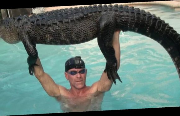 Florida man swims with, rescues 9-foot-long 'real mellow' alligator from pool