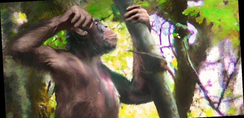 Scientists discover remains of mysterious ape species with 'human-like legs'