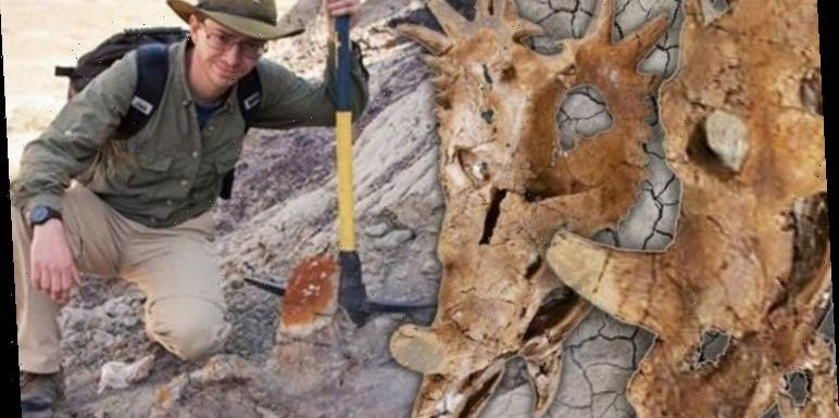Dinosaur discovery: How one dinosaur skull threatens to turn palaeontology on its head