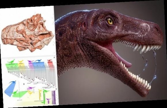 Skeleton of world's oldest meat-eating dinosaur unearthed in Brazil