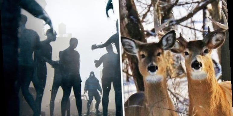 Zombie outbreak: Deadly disease in deer could spread to humans – warning