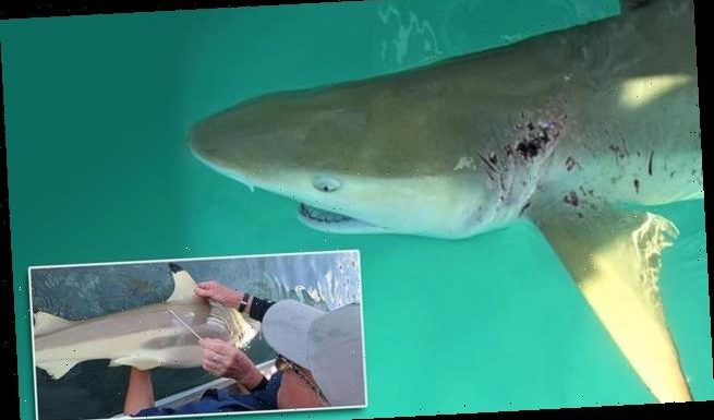 Germs found to keep shark wounds free of infections, study finds