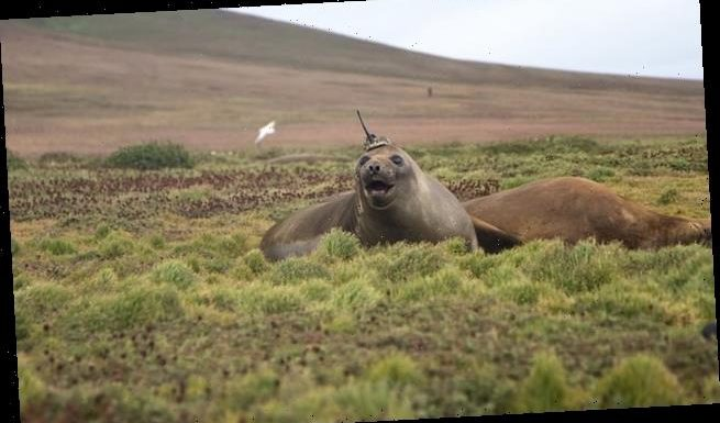 NASA enlists elephant seal to study water temperatures in Antarctica