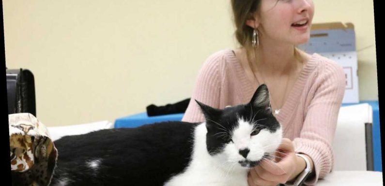 Fur Real: Teen finds her long-lost cat while volunteering at animal shelter