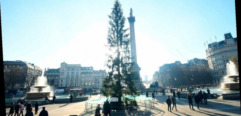 Trafalgar Square Christmas tree in London panned as looking 'a bit thin'
