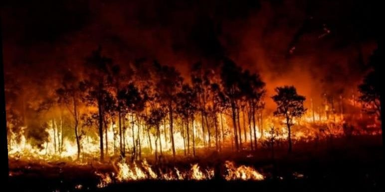 Australia fires: 'Worst is yet to come!' Expert warns as Australia burns