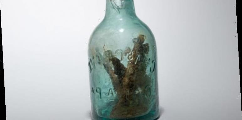 Archaeology news: Witch's bottle found in US Civil War fort