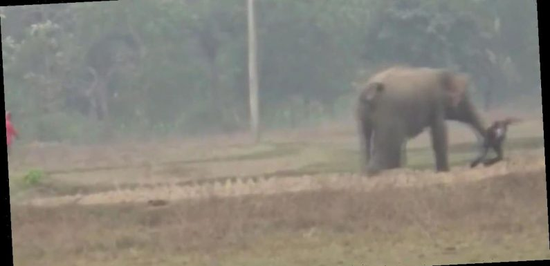 Moment elephant almost tramples tourists after they try to take selfie with it