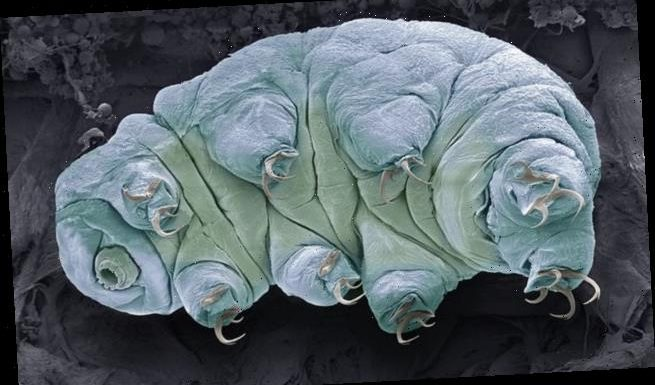 Not even tardigrades will survive global warming, study finds