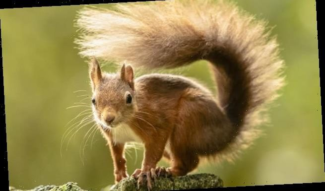 Trees planted as part of Mail's campaign will be vital for squirrels