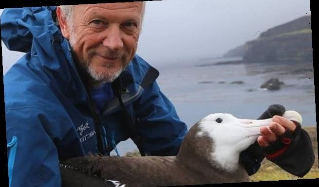 Scientists use ALBATROSSES to track illegal fishing boats